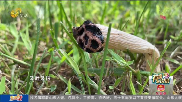 【有事您说话】潍坊:树下捡蘑菇 吃完进了重症监护室