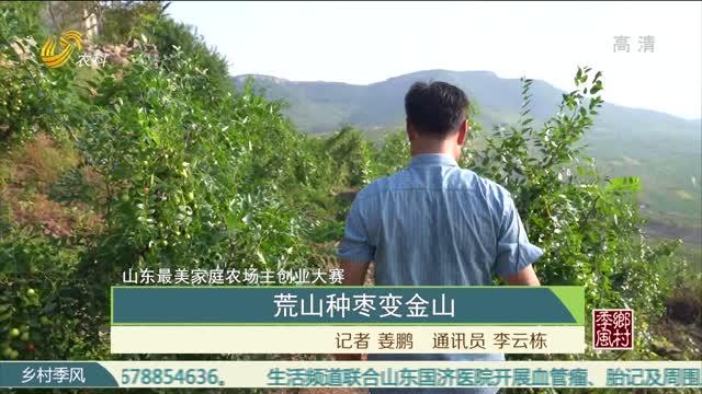【山东最美家庭农场主创业大赛】荒山种枣变金山