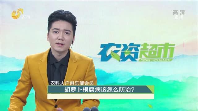 【农科大户俱乐部会员】胡萝卜根腐病该怎么防治?
