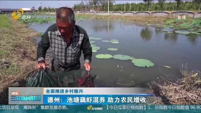 【全面推进乡村振兴】德州:池塘藕虾混养 助力农民增收