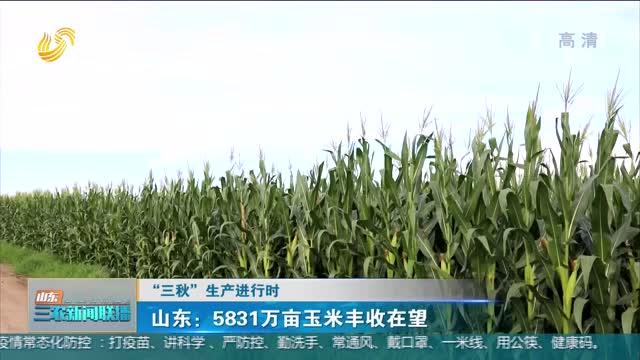 """【""""三秋""""生产进行时】山东:5831万亩玉米丰收在望"""