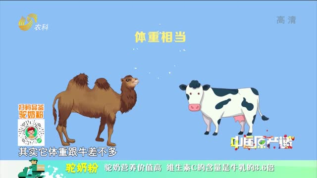 20210922《中国原产递》:驼奶粉