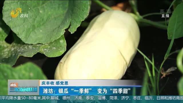 """【庆丰收 感党恩】潍坊:银瓜""""一季鲜""""变为""""四季甜"""""""