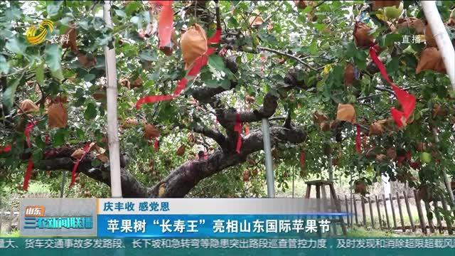 """【庆丰收 感党恩】苹果树""""长寿王""""亮相山东国际苹果节"""