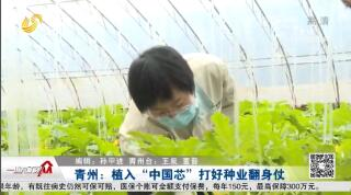 """青州:植入""""中国芯"""" 打好种业翻身仗"""
