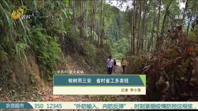 【史丹利·星光农场】桉树用三安 省时省工多卖钱