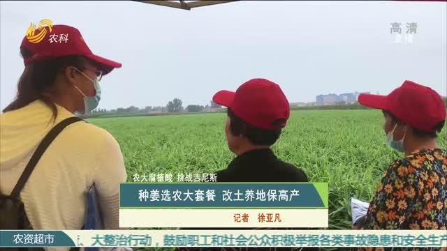 【农大腐植酸 挑战吉尼斯】种姜选农大套餐 改土养地保高产