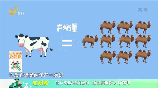 20210928《中国原产递》:驼奶粉