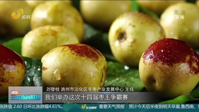 【庆丰收 感党恩】滨州沾化:又是一年冬枣红
