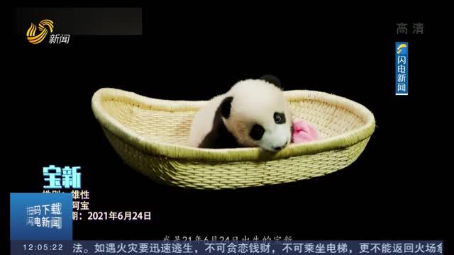 【闪电热播榜】超可爱!2021级熊猫宝宝祝大家国庆快乐