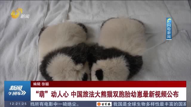 """""""萌""""动人心 中国旅法大熊猫双胞胎幼崽最新视频公布"""