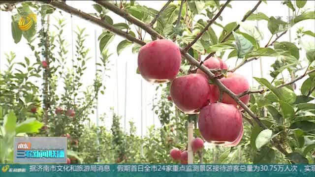 """【""""三秋""""生产进行时】胶东多地遭遇冰雹 农业生产需防范病害"""