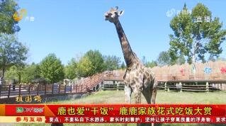 济南:长假来了 看看可爱动物解解压!