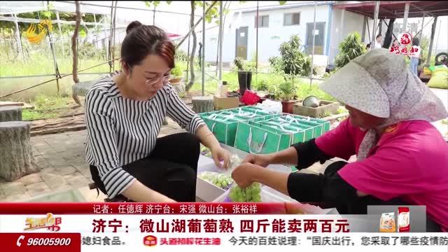济宁:微山湖葡萄熟 四斤能卖两百元