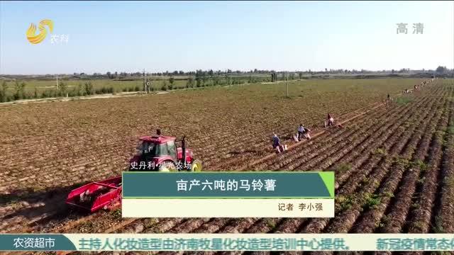 【史丹利·星光农场】亩产六吨的马铃薯