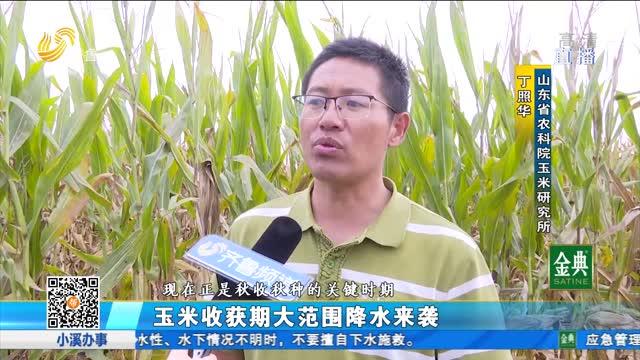玉米收获期大范围降水来袭