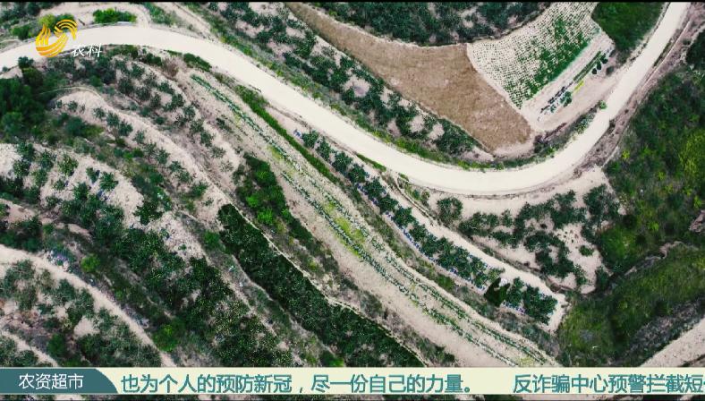【史丹利·星光农场】甘肃静宁:干旱之年 苹果照样夺高产