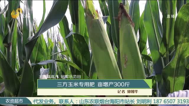 【三方赢高产 冠军示范田】三方玉米专用肥 亩增产300斤