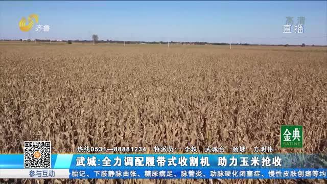 武城:全力调配履带式收割机 助力玉米抢收