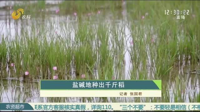 盐碱地种出千斤稻