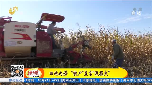 """平阴:""""定制农业""""模式 减少秋收损失"""