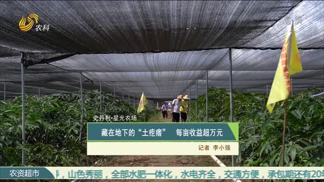 """【史丹利·星光农场】藏在地下的""""土疙瘩"""" 每亩收益超万元"""