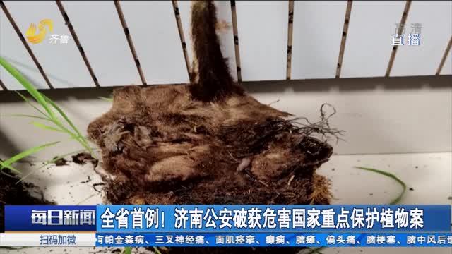 全省首例!济南公安破获危害国家重点保护植物案