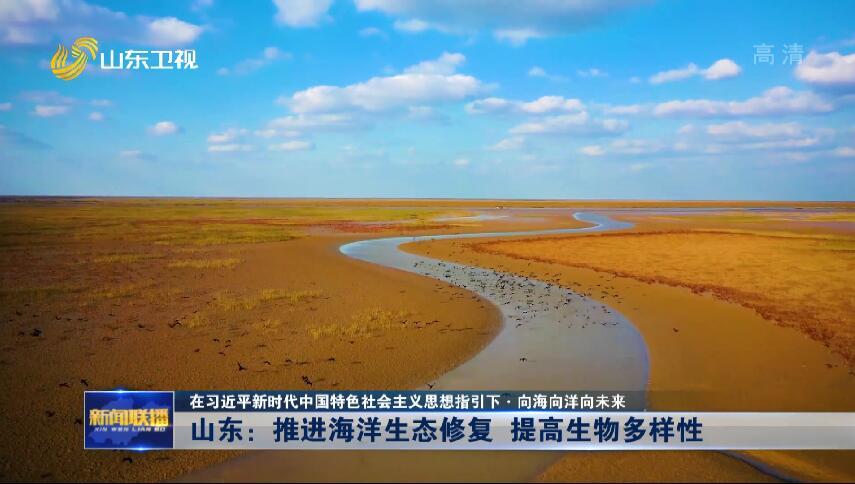 【在习近平新时代中国特色社会主义思想指引下·向海向洋向未来】山东:推进海洋生态修复 提高生物多样性