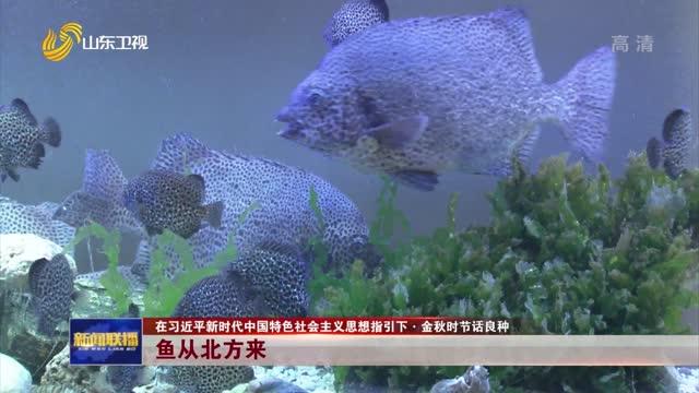 【在习近平新时代中国特色社会主义思想指引下·金秋时节话良种】鱼从北方来