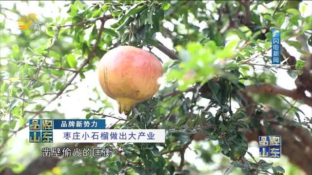 【品牌新势力】枣庄小石榴做出大产业