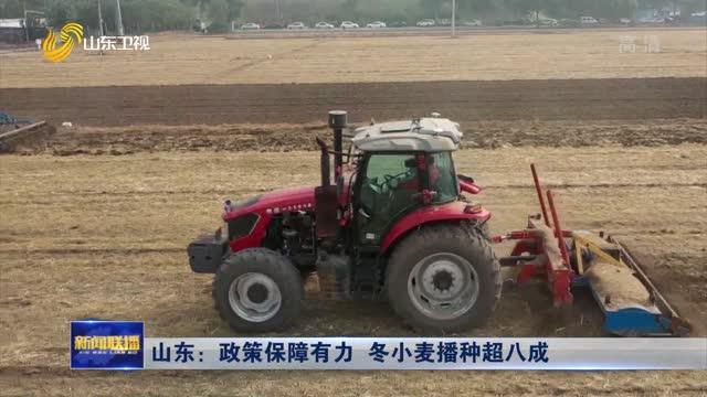 山东:政策保障有力 冬小麦播种超八成
