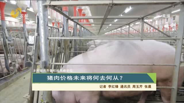 【齐鲁畜牧】乡村振兴齐鲁样板高峰论坛 猪肉价格未来将何去何从?