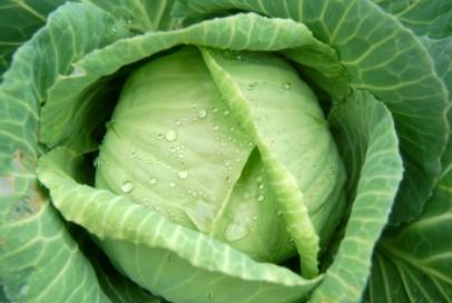 春季常吃这些蔬果想不瘦都难