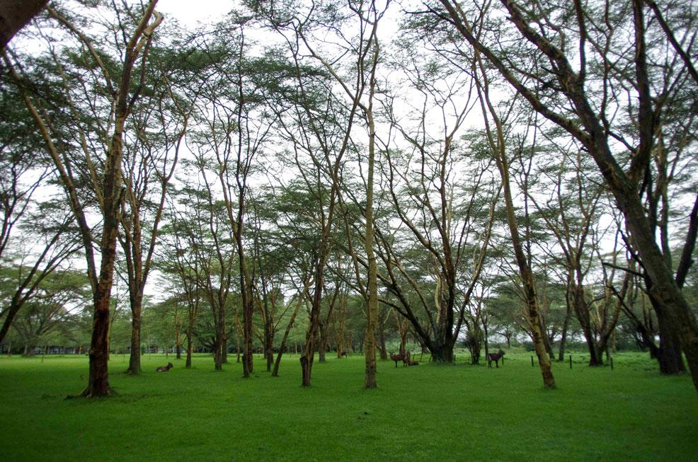 湖畔酒店草坪上能发现野生动物1.jpg