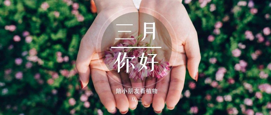 连载丨陪小朋友看植物:三月