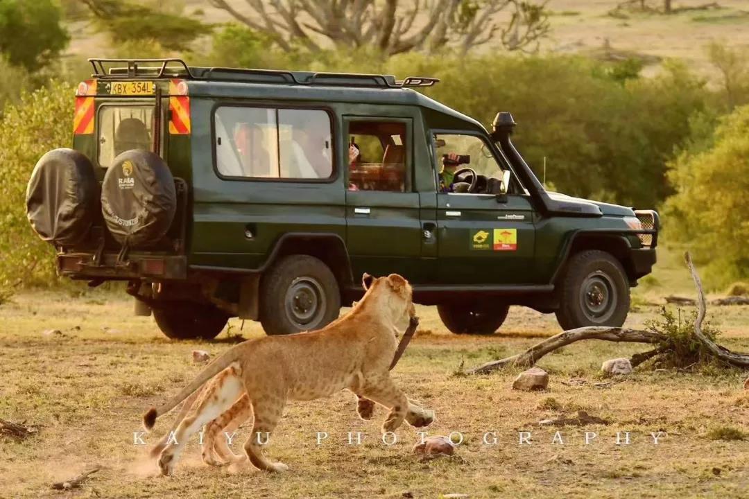 生于獅子座,承擔起拯救獅子的重任