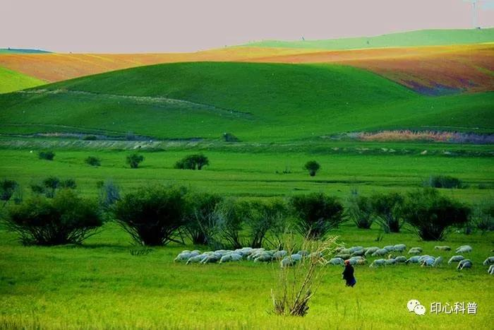 自然教育||生态系统之陆地的草原生态系统