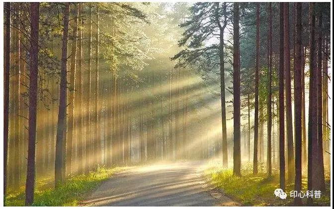 自然教育|生态系统之陆地的森林生态系统